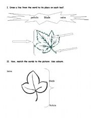 English Worksheets: Parts of a leave