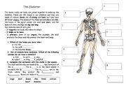 English Worksheets: Complete the skeleton