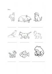 English Worksheets: Animals I know