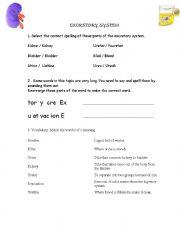 English Worksheets: Excretory System