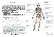 English Worksheet: Body Bones