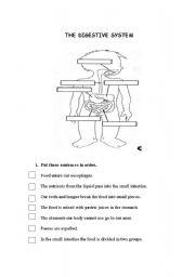 english worksheets digestive system. Black Bedroom Furniture Sets. Home Design Ideas