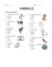 English Worksheets: Animal Around Us