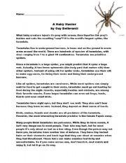 English Worksheets: Reading Comprehension - Spider -