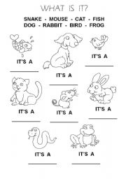 English Worksheets: Animals 1