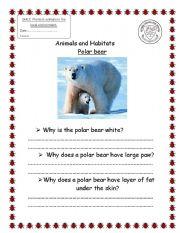 English Worksheet: polar bear habitat