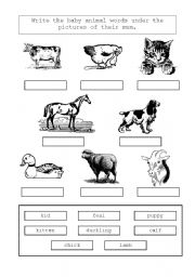 English Worksheets: Animals and their mums