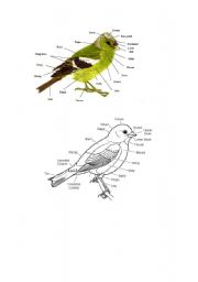 English Worksheet: part of bird