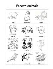 vocabulary worksheets general Forest Animal Vocabulary Sheet