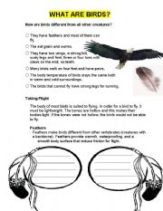English Worksheets: What Are Birds