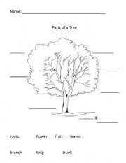 parts of a tree esl worksheet by nanz09. Black Bedroom Furniture Sets. Home Design Ideas