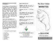 English Worksheets: West Indian Manatee