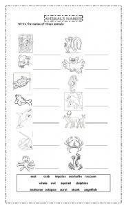 English Worksheets: Forest and ocean animals and habitats