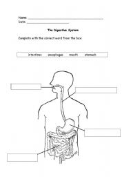 Worksheets Digestive System Worksheet english teaching worksheets digestive system the system