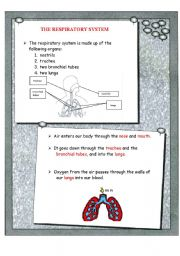 English Worksheet: The respiratory system