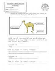 Adaptation Worksheet - Khayav