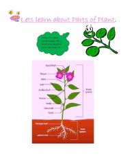English Worksheet: Learning Parts of Plant
