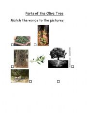 English Worksheet: Parts of the olive tree