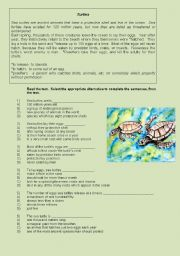 English Worksheets: SEA TURTLES.