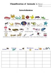English Worksheet: classification of animals 2.