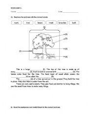 English Worksheet: parts of tree