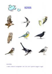 English worksheets: Birds - picture vocabulary