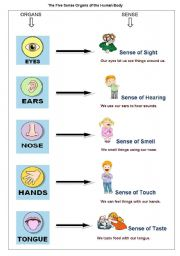 English Worksheets: The Five Sense Organs of the Human Body