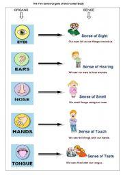 English Worksheet: The Five Sense Organs of the Human Body