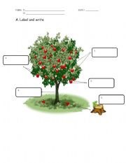 English Worksheets: Label the Tree