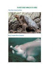 English Worksheets: THE MOST RAREST ANIMALS IN THE WORLD
