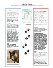 English Worksheets: Alaskan Wolves