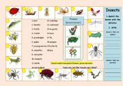 English Worksheets: Insects / living things