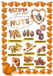 English Worksheet: Nuts