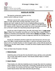 English Worksheet: Muscular system