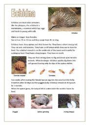 English Worksheets: Echidnas (Australian anteaters)