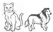 English Worksheets: Domestic Animals