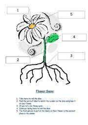 English worksheet: Label a plant