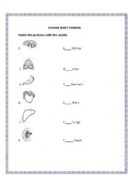 English Worksheet: Human Body Organs