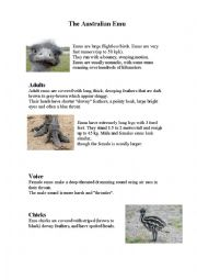 English Worksheet: The Australian Emu