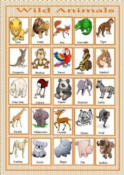 English Worksheet: wild animals pictionary