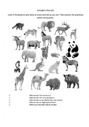 English Worksheets: Animals in our life