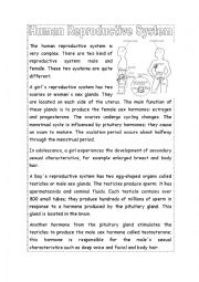 English Worksheet: Human Reproductive System
