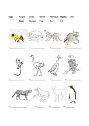 English Worksheets: Some (less) Basic Animals