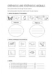 English Worksheets: Oviparous or viviparous