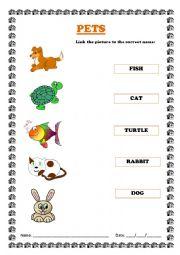 Pet Animals Images For Kids English worksheet: pet animals