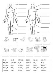 English Worksheets: Parts of the body, animals and colours