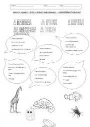 English Worksheet: ANIMALS CLASSIFICATION