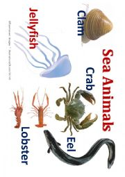 English Worksheets: Sea animal