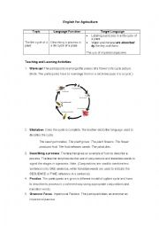 English Worksheet: The Life Cycle of a Plant