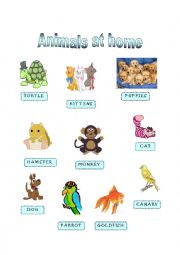 English Worksheet: Animals at home - Part I
